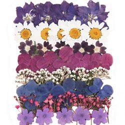 Fiori pressati confezioni. Art & craft, biglietti materiale. Mixed premuto Fiori e foglie.