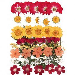fiori pressati , margherita bianca 20 pezzi . l'arte della carta del mestiere materiali per la fabbricazione , decorazione domestica