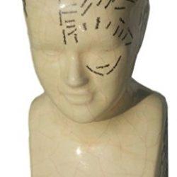 Testa frenologica in ceramica