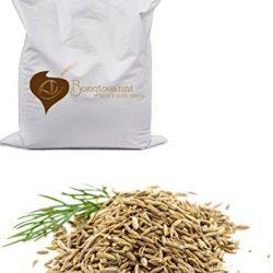 Probios Finocchio Semi Bio – Confezione da 1 kg