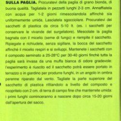 Fuanxi 200 Semi Della Pampa Erba Cortaderia Selloana per Giardino Cortile
