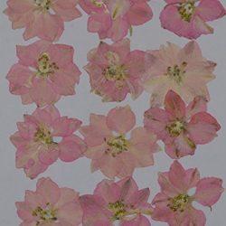 handi-kafu vera pressata rosa Larkspur fiori secchi