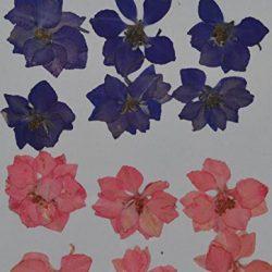 handi-kafu viola rosa Larkspur vera premuto fiori secchi