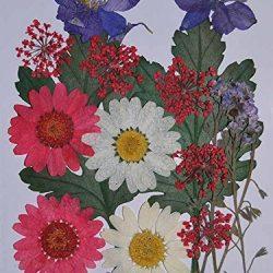 handi-kafu misti Daisy Larkspur Myosotis Foglia Reale fiori essiccati 2