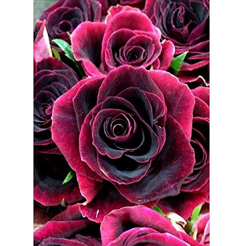 MXJSUA Kit di Pittura Diamante 5D Fai-da-Te Trapano Pieno Rotondo Cristallo Strass Immagine Arti Mestieri per la Decorazione della Parete di casa Regalo Rose 30×40 cm