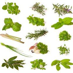 Miscela di erbe (erbe culinarie) – 14 tipi – 1630 ++ semi – ordinati per tipo –