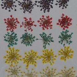 HANDI-KAFU viola rosso blu giallo Queen anne' S Lace Real pressato fiori secchi