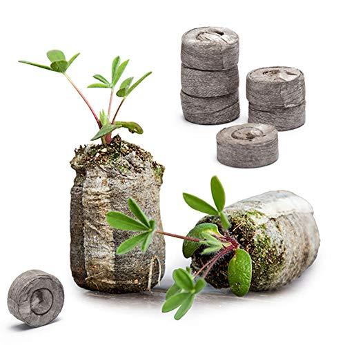 Danolt 36 Pezzi dischetti di Torba per germinazione – Il Terreno compresso Si espande con Acqua per piantare Erbe, Fiori e Verdure, Facile da trapiantare. 2