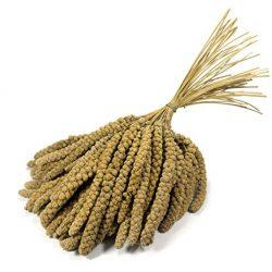Britten & James® Premium Quality Spray da 10 pollici Millet. Circa 1kg.